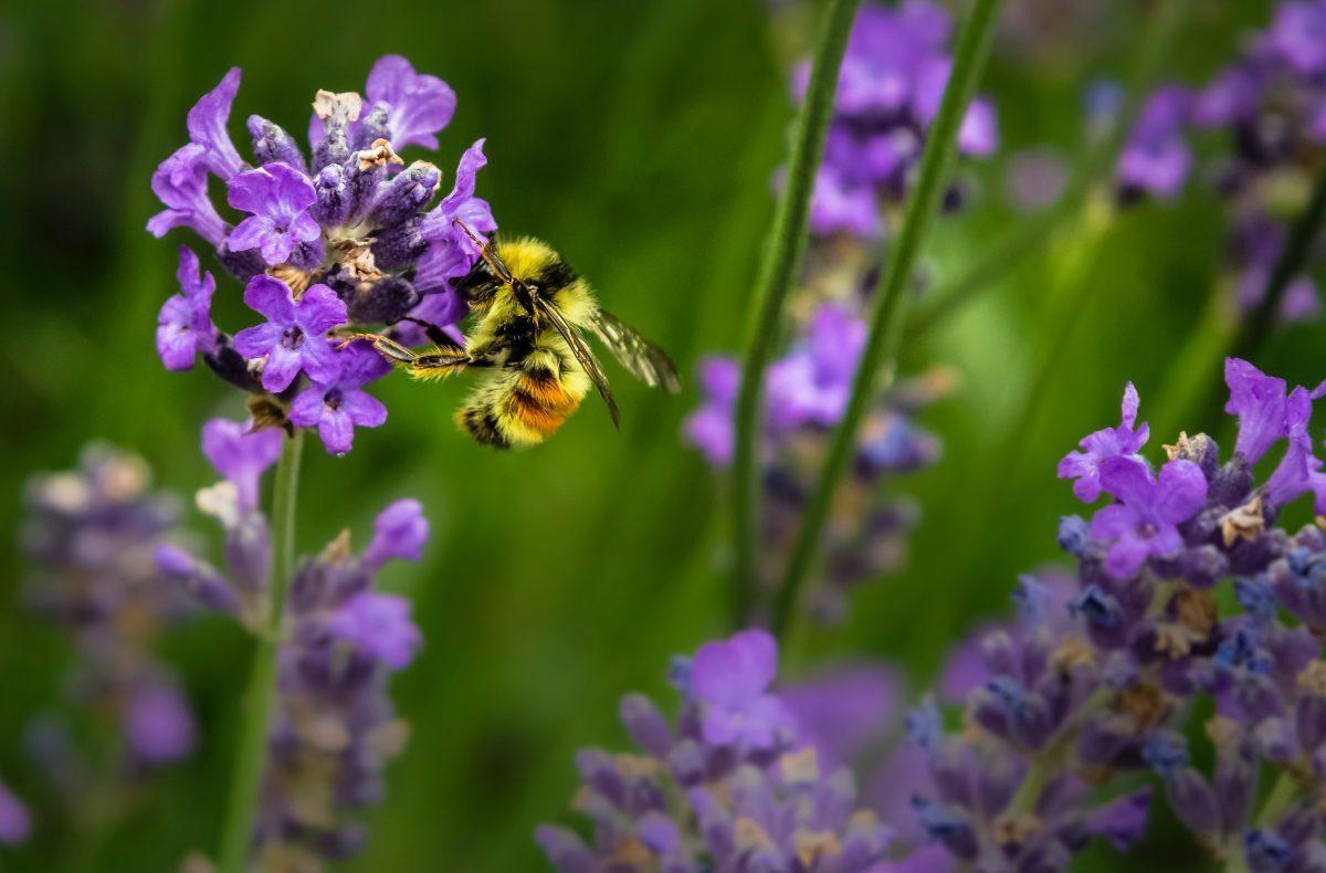 Elsker blomsterne jeg jeg bierne elsker Jeg synes,