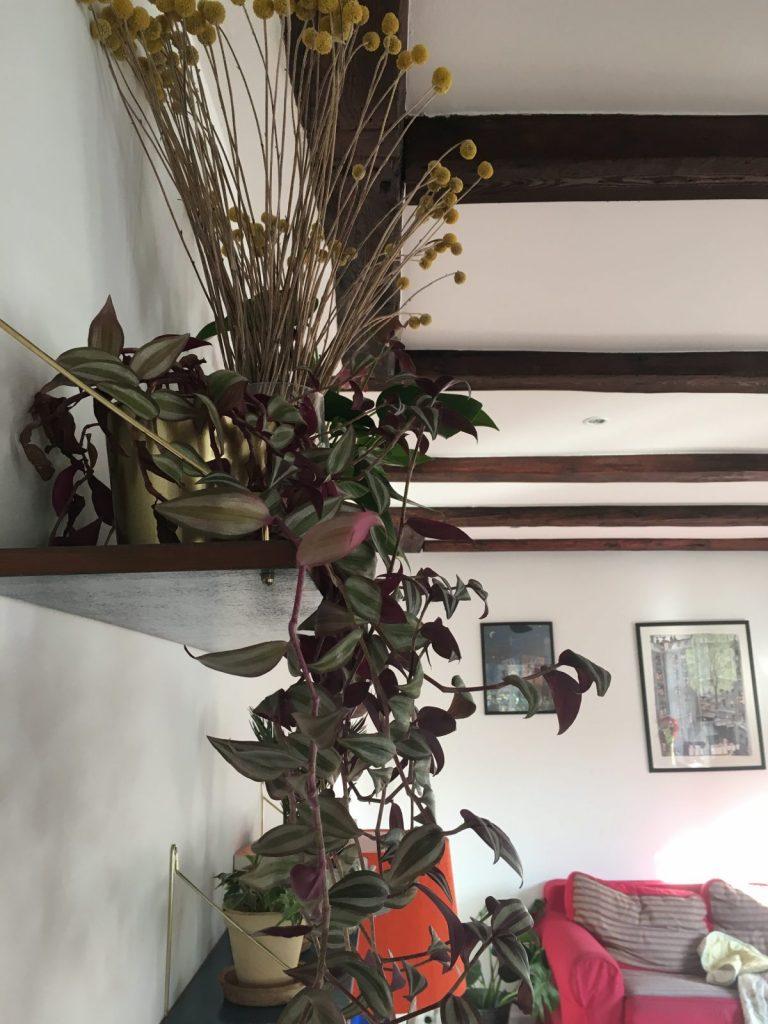 Ibens planter