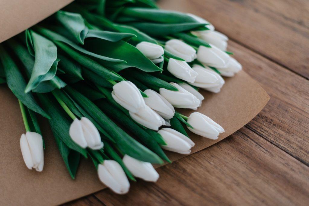 Hvide tulipaner